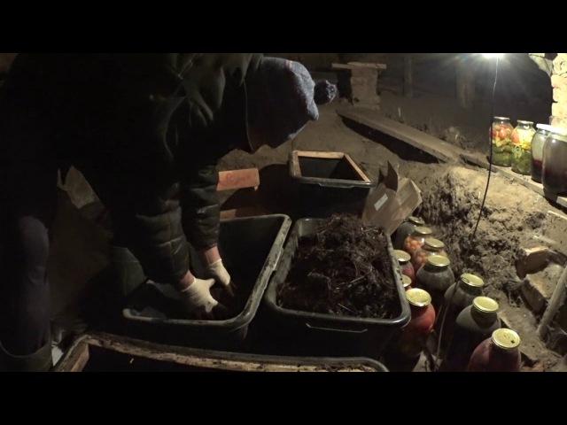 Ошибки при создании вермифермы в домашних условиях Жизнь в деревне