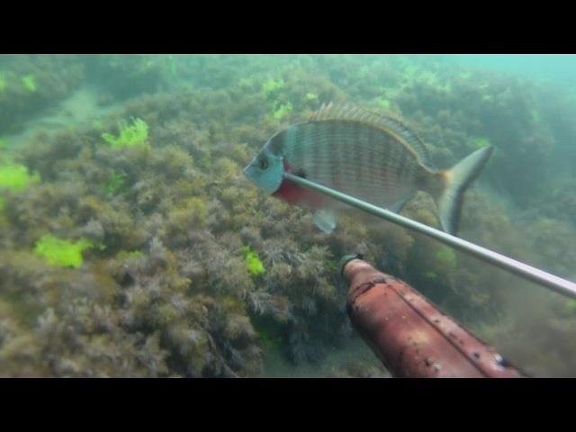 Подводная охота Крым,Судак, дельфин сентябрь2017