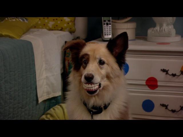 Собака точка ком - Сезон 1 Серии 4, 5, 6