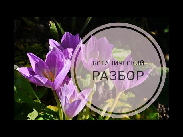 Осенний крокус или Безвременник Разбор цветка Видеоразбор цветов от Елены Гуреевой