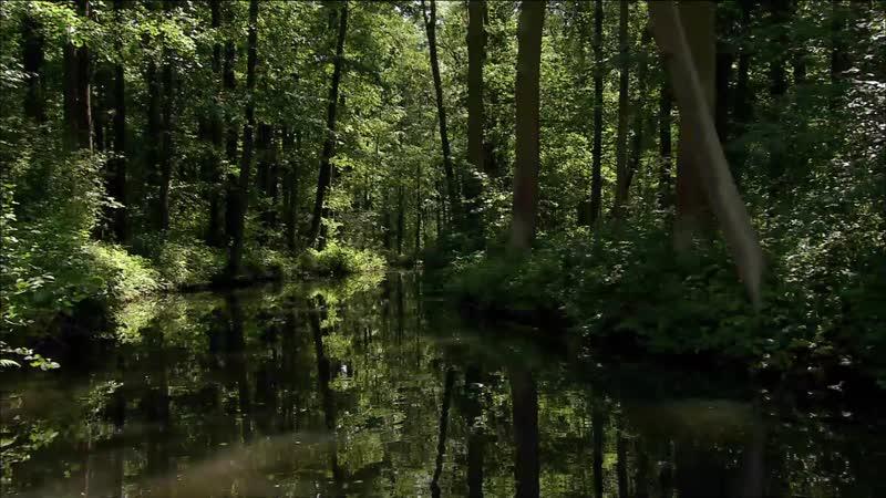 Дикая природа Германии / Леса реки Шпрее