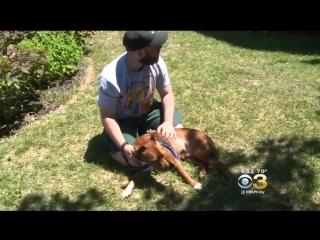 Питбуль герой спасла свою семью  от пожара дома (пес спасла человека)