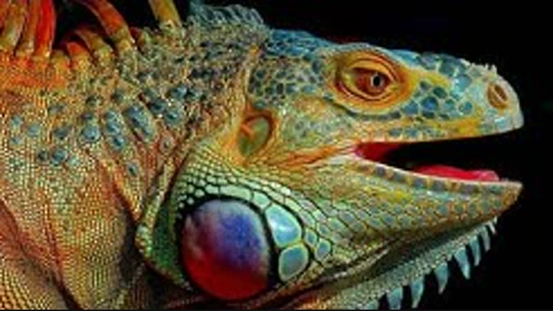 Дикая Шри Ланка Потрясающий фильм National Geographic