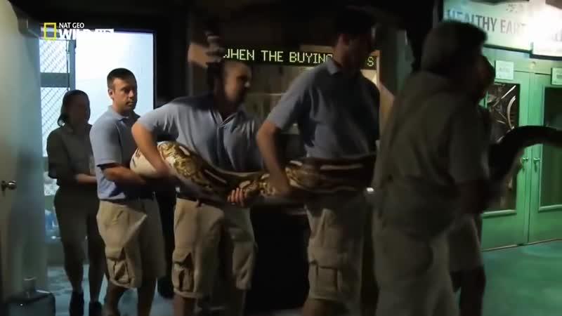 Гиганты мира животных Крупные змеи Документальный фильм