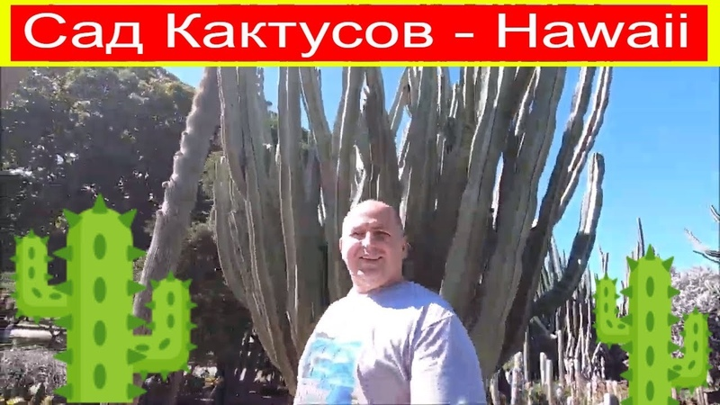 Потрясающий Сад Кактусов Hawaii Honolulu Oahu Kapi'olani Community College KCC Cactus Garden