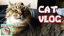 Cat vlogs The cat sleeps with the owner Cats and pelvis
