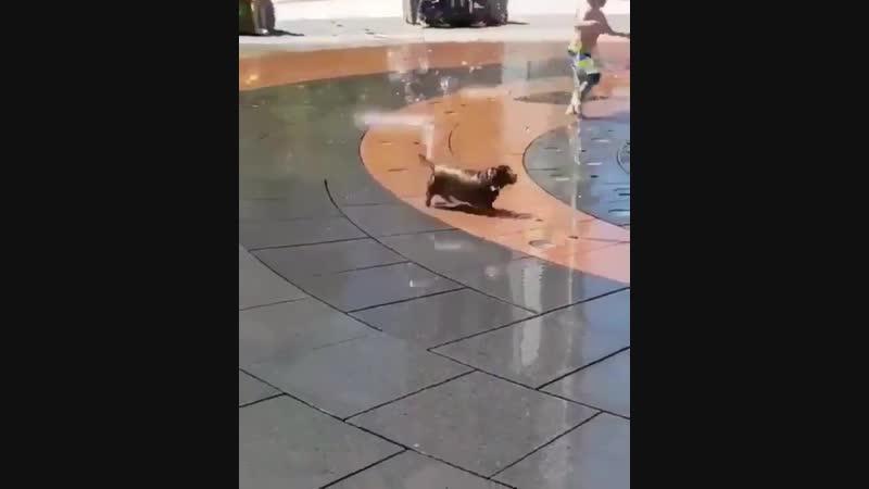 A frolicking water sausage