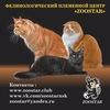 Клуб кошек ZOOSTAR Выставки и котята Новосибирск