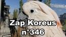 Zap Koreus n°346