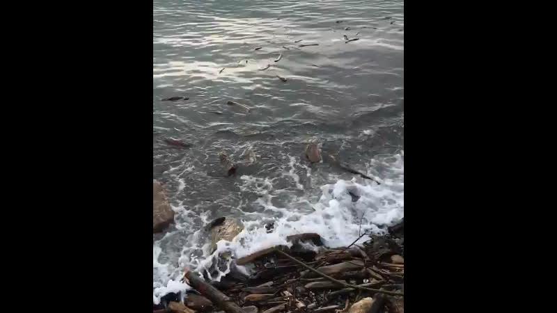 Десятки туристов помогли расчистить берег от выброшенных штормом брёвен и палок на пляже Ривьера в Сочи