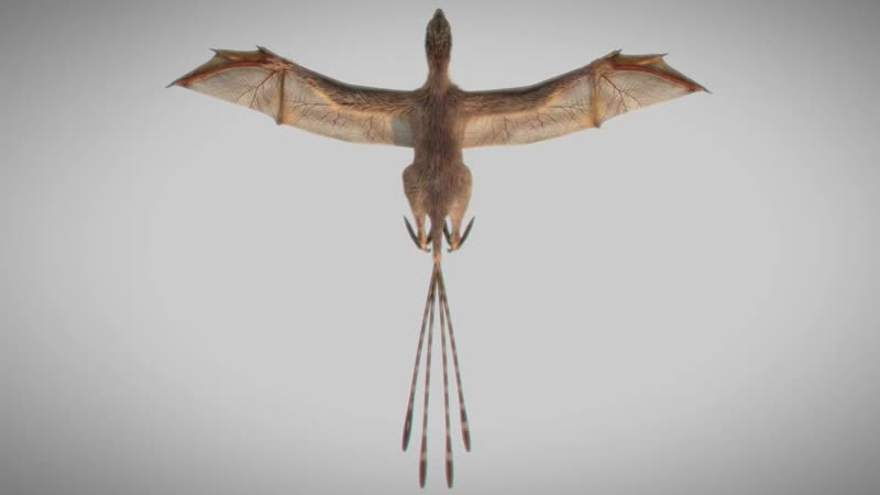 A membranous winged 163 million year old non avian theropod Ambopteryx longibrachium from China 720p via Skyload