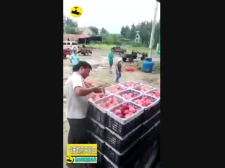 Обработка продуктов питания химикатами ( Китай ) ...