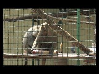 Зоомороженое и водные процедуры: как животные в Экопарке спасаются от жары