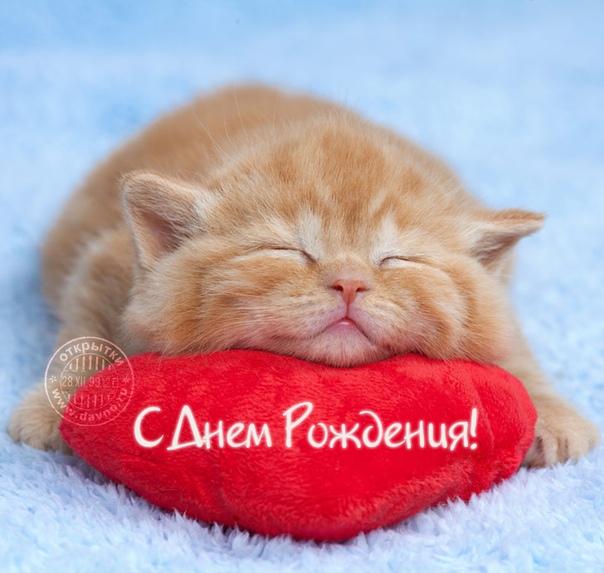 открытка с днем рождения кот на подушках солодовникова активна социальных