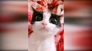 Приколы с животными 2019 23 Смешные видео про котов и собак до слез 2019, видео про кошек 2019