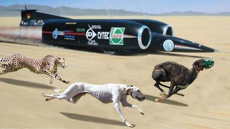 Gezegenin En Hızlı 13 Köpek Irkı