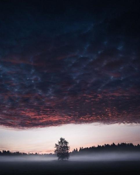 Фотограф делает идеальные снимки одиноких деревьев на фоне безмятежных финских пейзажей Фотограф Микко Лагерштедт (Mio Lagerstedt) по-настоящему влюблён в природу. Недавно он запечатлел тихую
