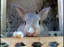 NAPOLLY 1 ամսական ճագարի ձագուկներ