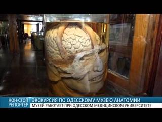 Экскурсия по Одесскому музею анатомии: скелеты, черепа, органы и эмбрионы