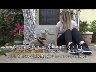 A young girl donates her cheeseburger to help us save a homeless dog
