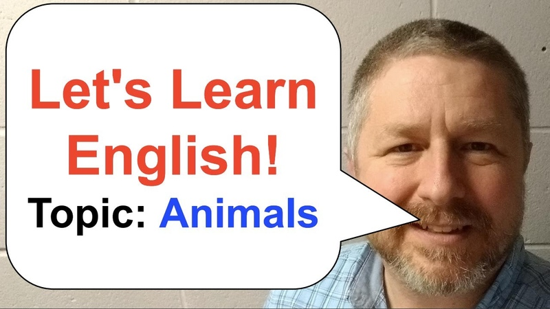 Lets Learn English | Topic Animals | learnenglish | 🐭 🐹 🐰 🐶