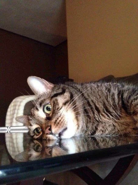 Cqk L2t5aN4 - Лучшие коты интернета на этой неделе