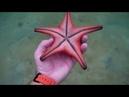 Подводный мир Вьетнама, о. Фукуок