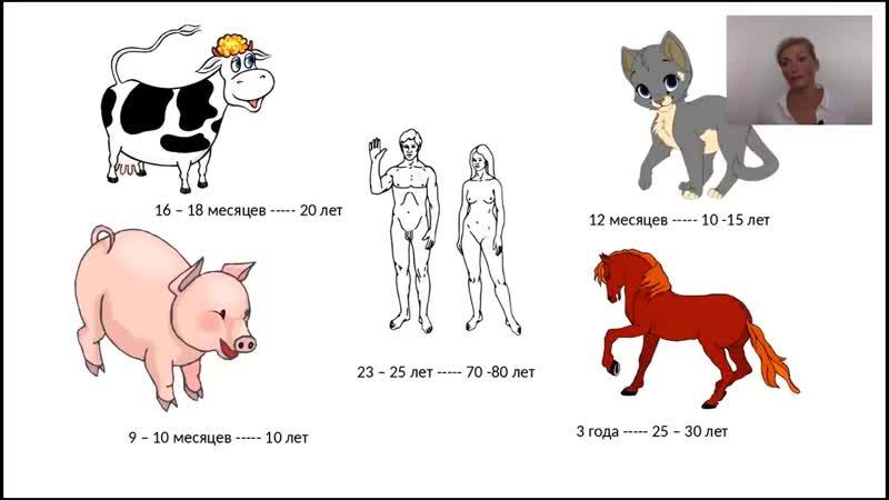 Похудеть эффективно без вреда для здоровья