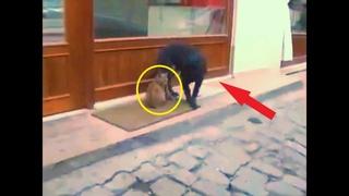 Уличный кот и пёс столкнулись нос к носу у дверей кафе  То, что было дальше, просто невероятно!