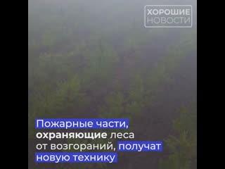 В Крыму высадят более 500 гектаров леса за два года