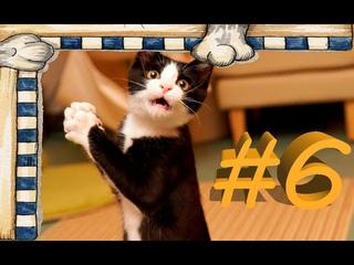 СМЕШНЫЕ КОТЫ Смешное видео про кошек, видео нарезка приколов 2021! выпуск #6