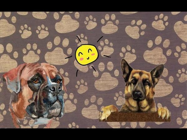 Тузик взял след Жизнь в деревне Любители собак