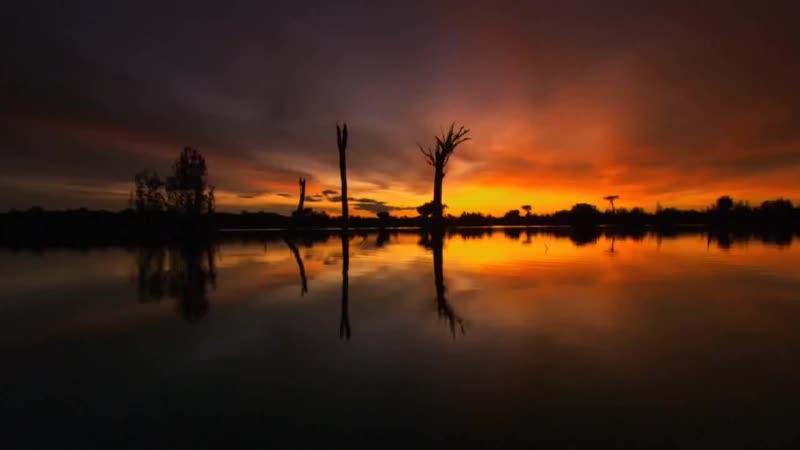 Дикая природа Амазонки 2 Дикое царство