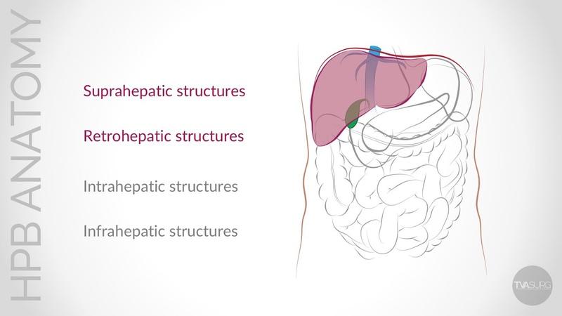 Update on Conventional Hepato-Pancreato-Biliary (HPB) Anatomy: Supra- and Retro-hepatic Anatomy