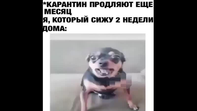 Animal.online_20200405_101948_0.mp4