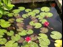 Мир цветов Водные растения