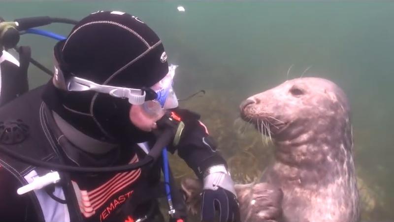 Taucher versteht nicht was die Robbe von ihm will dann nimmt das Tier seine Hand