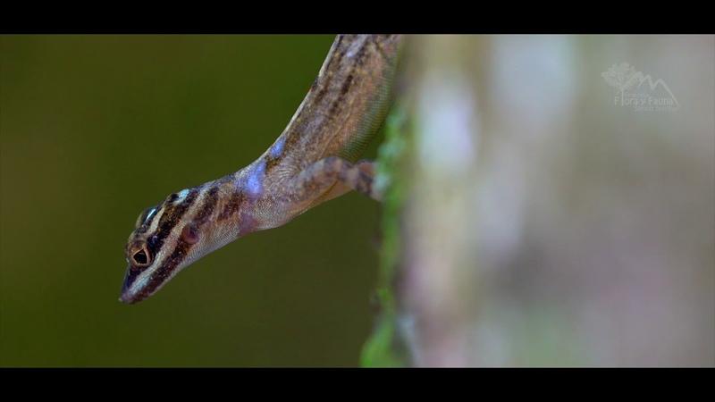 Reserva Ecológica Lomas de Banao y Refugio de Fauna Tunas de Zaza