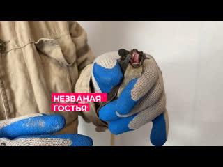 Незваная гостья / Тюмень
