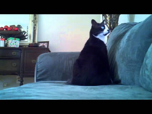 Deaf Cat Confusing Wake Up
