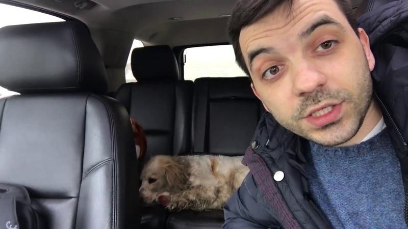 Новый подопечный Собака со сломанной лапой