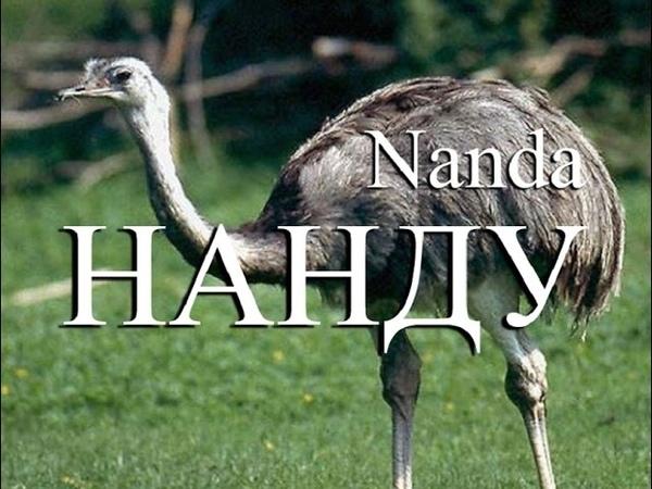 Нанду Nanda