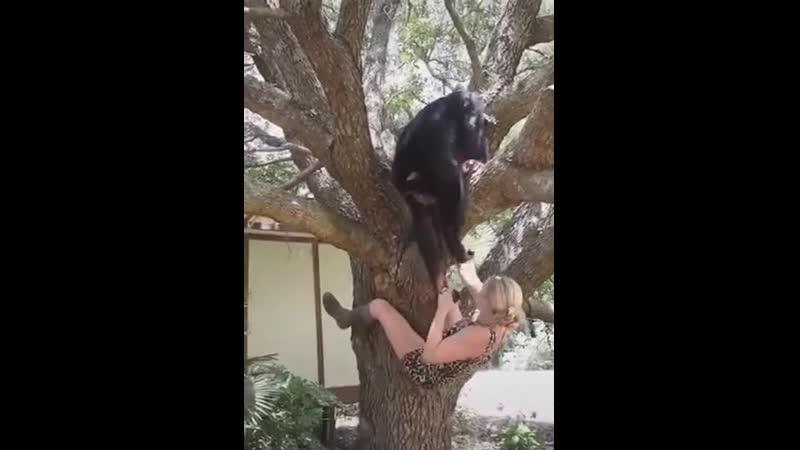 Помощь другу Animal Planet