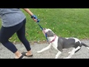BEST DOG TRAINING COLLAR IN THE WORLD - SAFECALM - Dog Whisperer BIG CHUCK MBRIDE