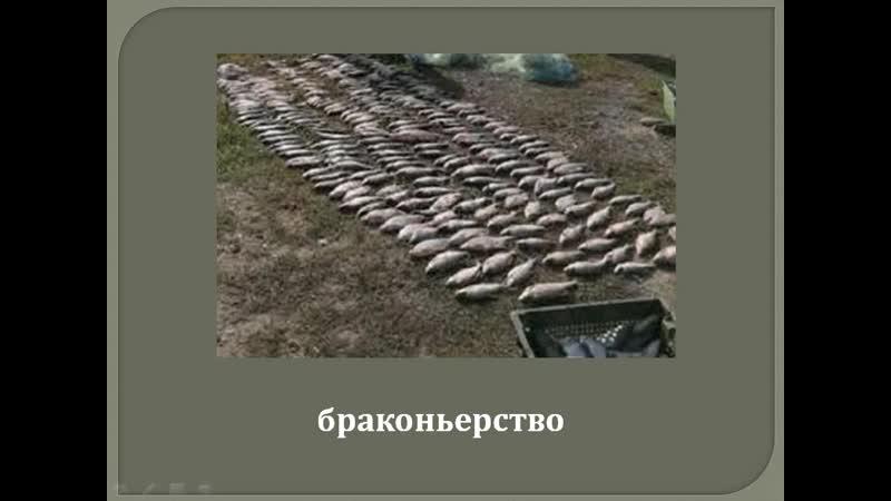 В. Астафьев Царь-рыба