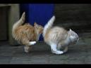 Супер кот/Смешное видео про котов 3