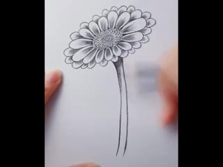 Учимся рисовать цветы простым карандашом