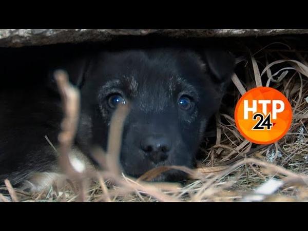 Нижнекамец нашёл под бетонной плитой семь щенков теперь им ищут дом