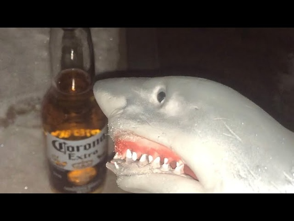 Shark puppet drinks beer