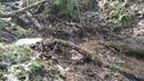 Green Hills родник в лесу.